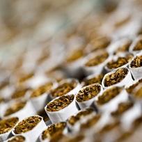 taxe-tabac-thumbnail